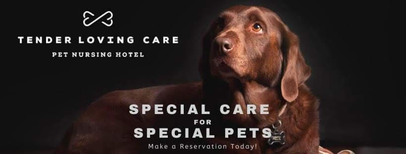 Tender Loving Care Pet Nursing Hotel Ad